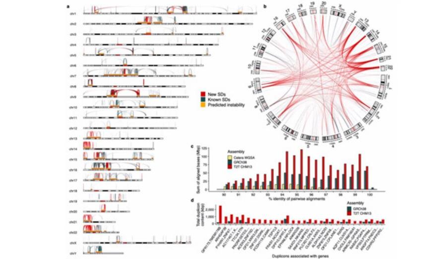 Histórico: cientistas conseguem sequenciar o genoma humano completo pela primeira vez - 1