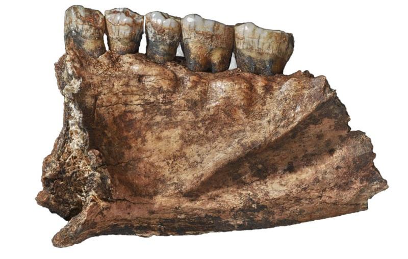 Dieta pré-histórica: estudo revela o que os neandertais comiam há 60 mil anos - 1