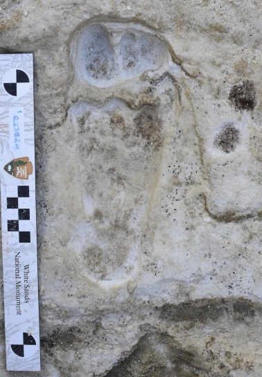 Pegadas humanas mais antigas das Américas são encontradas nos EUA - 1